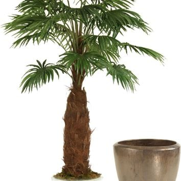 8' Fan Palm Tree In Metallic Bronze Glazed Stoneware Pot
