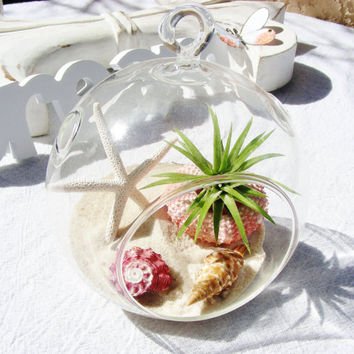 BeachSide  Glass Globe Hanging Terrarium Kit with Tillandsia  Air Plant - Beach - Home Decor - White Starfish - Pink Sea Urchin - Gift