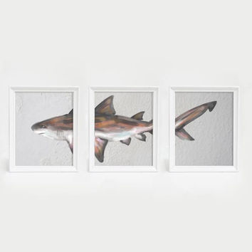 Bull Shark Triptych Wall Art Print