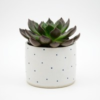 Susan Simonini Ceramics — Dotty Planter