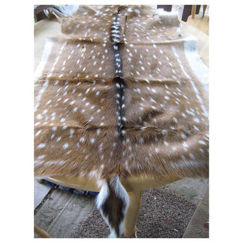 Spotted DEER - LARGE Tanned Hide - Supply