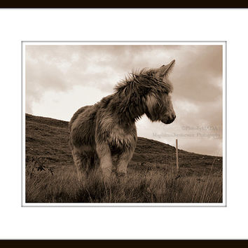 Donkey photography,  Animal photo print,  Irish Landscape Fine Art, brown monochrome potograph, sepia wall decor print, country house decor,