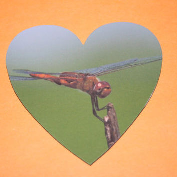 Dragonfly Heart Magnet Nature 3 inch Photo by Valiantstudios