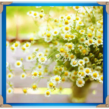 Chrysanthemum Seeds 1000pcs Flower of Indian Dendranthema field flower white yellow petal flower seeds for garden plant seeds
