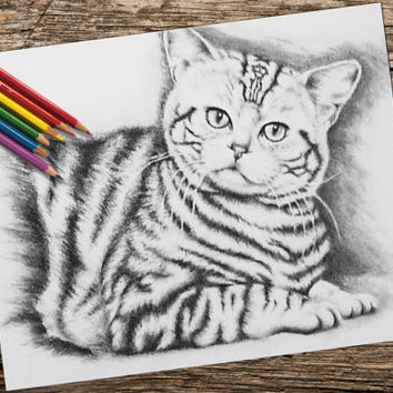 Adult Coloring Page, Printable coloring page, Instant download coloring, Tiger Cat coloring page, coloring page, coloring book for adults