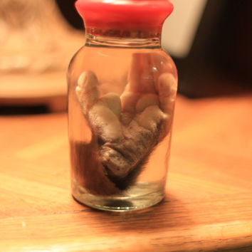 Amazing Wet Specimen Opossum Foot in Beautiful Wax-Sealed Glass Jar