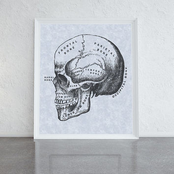 Vintage skull illustration, blue and black line drawing print, art for the home, home decor prints, quirky art poster, human skull print