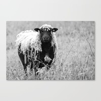 Sheep with sharp eyes Canvas Print by tanjariedel