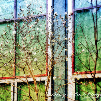 spring blossoms, colorful impressionistic art photo, flowering tree in front of windows, colorful wall decor, modern loft