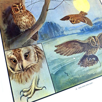 Owls, Vintage School Poster, Enid Byton picture, Eileen Soper poster, Bird art, Gift for Bird Lover, Nature Print
