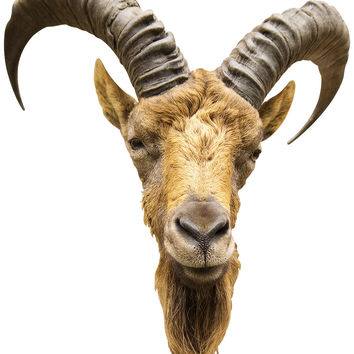 Goat Mount Wall Decal