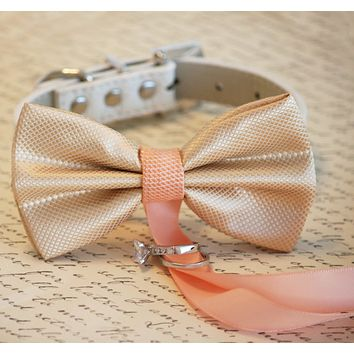 Champagne and Peach wedding, Dog ring bearer, Dog Bow Tie