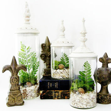 Decorative Terrarium Set: Woodland White Shabby Chic Jars with Live Plants