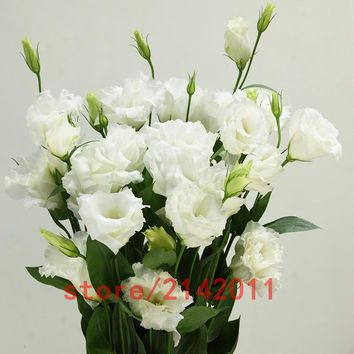 Hot Sale White Eustoma seeds Perennial flowering plants balcony potted flower seeds lisianthus for DIY Home & Garden