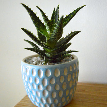 Carved Planter Cup Thrown White Clay Dots in Light Blue Underglaze