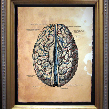 Brain Anatomy Diagram Art Print - Vintage Anatomy Art Print- Vintage Art Print on Tea Stained Paper