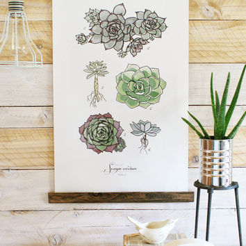 Sempervivum Vol.1 - large wall hanging, wood trim and printed on textured cotton canvas. Vintage Science Posters