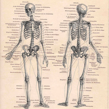 1894 skeleton human original antique anatomy lithograph print