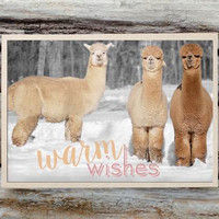 Alpaca Greeting Card - Warm Wishes