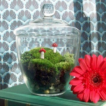 Apothecary Jar Moss Terrarium No 21 by blithegardens on Etsy