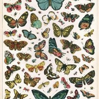 Cavallini & Co. Butterfly Chart Decorative Decoupage Poster Wrapping Paper Sheet