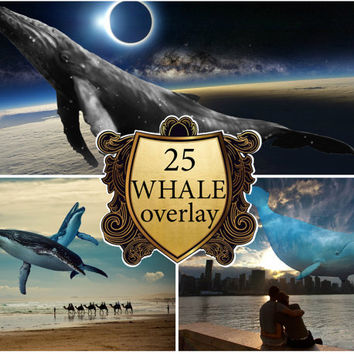 Whale overlays Ocean Sea overlay Arctic animals photo overlays Penguin Octapus Beluga Dolphin