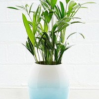 Urban Grow Two-Tone Planter in Blue - Urban Outfitters