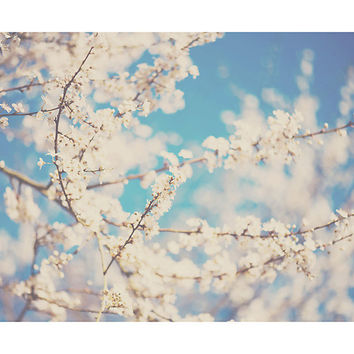 blossom photograph, blossom tree, pastel, pink, white, blue, flower photograph, nature photography, spring photograph, spring