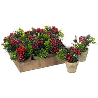 Buy Parlane Rose Berry Flower Pot, Assorted online at John Lewis