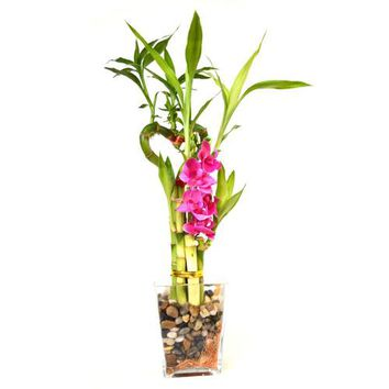 9GreenBox - Lucky Bamboo Heart Style with Glass Vase, Silk Flowers and Pebbles