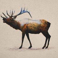 The Rocky Mountain Elk Art Print by Davies Babies