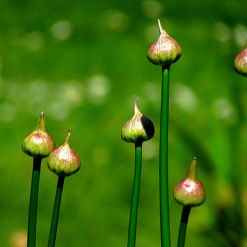 Green Garden Photo Art - Nature Photography File Download