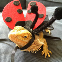 Ladybug and Bumble Bee Costumes for Bearded Dragons, Handmade
