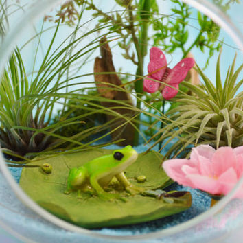 Frog on Lillypad Terrarium ~ Medium Glass Globe Terrarium Kit with 2 Air Plants ~ Terrarium ~ Gift Idea