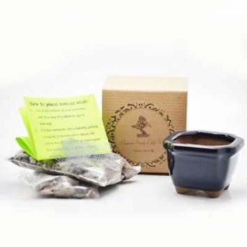 Red Japanese Maple Bonsai Seed Kit- Gift - Complete Kit to Grow