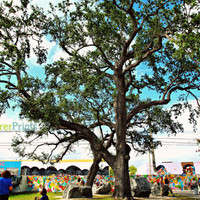Big Tree Cityscape - Arts District Miami Sunny Florida Photography print nature foliage epic artsy spring weather clear skies