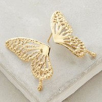 Culoyon Halved Goldenwing Posts in Gold Size: One Size Earrings