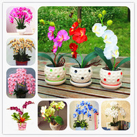 50 Pcs/Bag Bonsai Flower Orchid Seeds Beautiful Phalaenopsis Orchid Home Garden Plant Orchid Pot Quality Flower Seeds