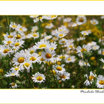 Daisy Floral Photography Flower,Gifts under 25,green,yellow,field of daisies,daisy print,wildflowers,summertime flowers,cheerful,fresh,cute