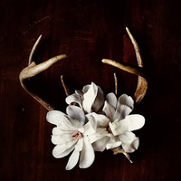 Antler and Magnolia No. 6935