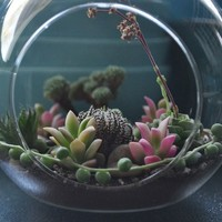 Succulent Terrarium Shade - Through the Looking Glass... A Shade Loving Mysterious Hanging Succulent Terrarium Orb