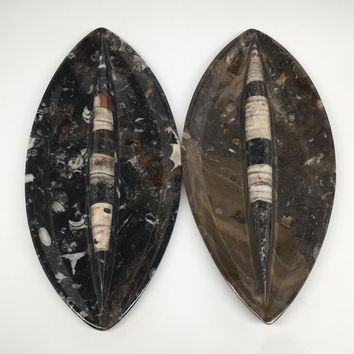 "2pcs,About 11.5""x5.3"" Fossils Orthoceras Ammonite Plates Dishes @Morocco,MF1349"