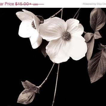 Botanical Art Print - Dogwood Flower Black and White Photography  -  Large Wall Art Print in 20x30 or 16x20
