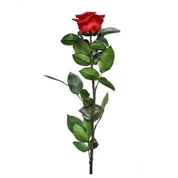 4-5CM Head,Length30CM Beauty And The Beast Forever Rose,Dry Natural Fresh Preserved Roses For Valentines Day Gift,Girlfriend