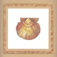 "Pacific Scallop Shell 10"" x 10"" custom matted lithograph"