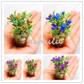 New Seeds 2018! 100 Pcs Rare Mini Rose Bonsai Seeds White Heart Pink Side Rose Seed Plants Potted Rose Rare Flower Seeds Balcony