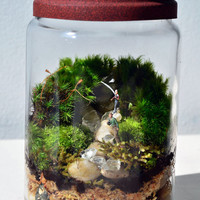 Moss terrarium in glass jar father and son fishing