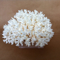 White Lace Coral Branch on Acrylic Base Nautical Beach Decor