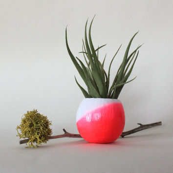 Neon Pink Ombre Air Plant Planter with Air Plant