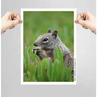 Gray squirrel Wildlife Photography/ OPEN EDITION prints / wildlife art and gray squirrel Photography / Green, Gray